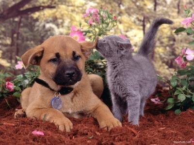 عکس های زیبا و جالب از سگ ها و گربه ها Www.Pix98.CoM